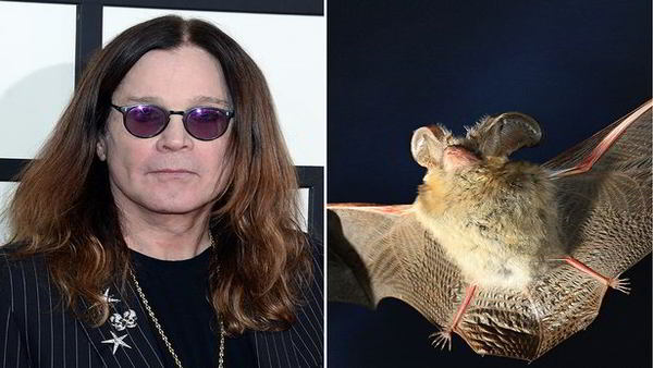 Ozzy Osbourne Bites a Bat on Stage