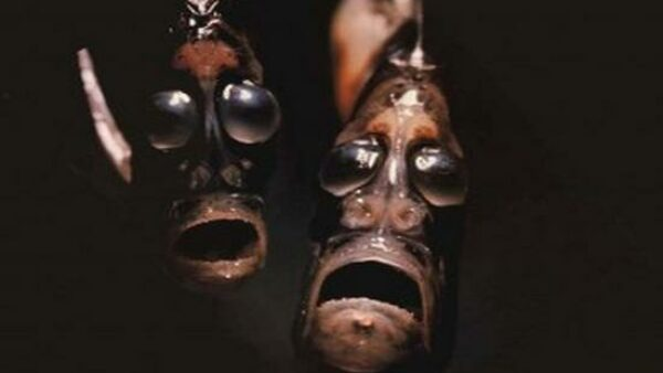 The Hatchetfish