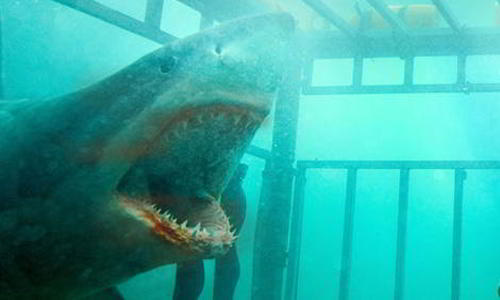 Image Result For Headed Shark Attack